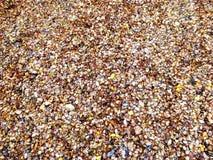 Раковины моря пляжа Коннектикута Стоковое Фото