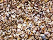 Раковины моря пляжа Коннектикута Стоковые Изображения RF
