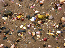 Раковины моря пляжа Коннектикута Стоковые Фото