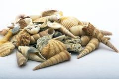 Раковины моря различных цветов и натюрморта форм Стоковая Фотография