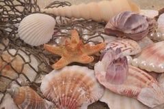 раковины моря рыболовной сети Стоковое Изображение RF