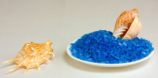 раковины моря соли Стоковое Изображение RF