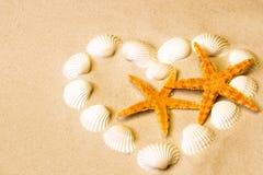 Раковины моря с песком как предпосылка Стоковое Изображение