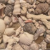 Раковины моря эксцентричные формы Стоковые Фотографии RF