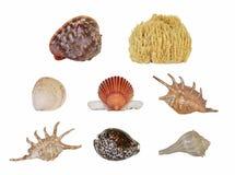 раковины моря Стоковое Изображение RF
