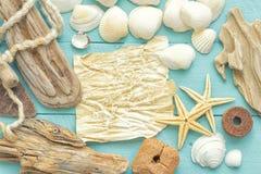 Раковины моря Стоковое Фото