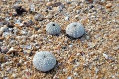 Раковины на береге Стоковые Изображения