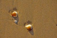 Раковины на береге Стоковая Фотография RF