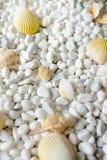 Раковины на белых камнях Стоковая Фотография RF
