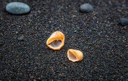 Раковины на отработанной формовочной смеси приставают к берегу в Padangbai, острове Бали, Индонезии Стоковые Фотографии RF