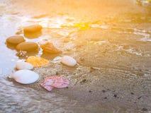 Раковины на песке на солнечный день Стоковое фото RF