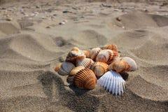 Раковины на песке, острове Zante Стоковое Изображение RF