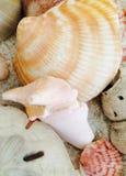 Раковины на песке Стоковая Фотография RF