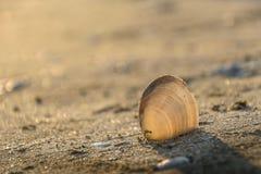 Раковины на пляже с солнечным светом стоковые фотографии rf