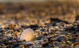 Раковины на пляже с солнечным светом стоковые изображения