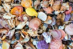 Раковины раковины на пляже Стоковые Фото