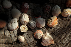 Раковины на пне, взгляд сверху моря Стоковое Изображение RF