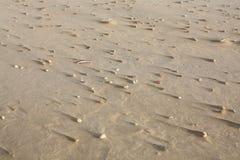 Раковины на пляже в провинции северной Голландии, Нидерландах Стоковое Фото