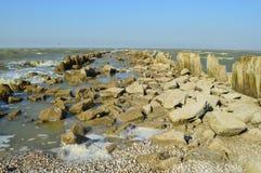 Раковины на пляже и прибое Стоковые Фото
