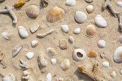 Раковины на пляже песка стоковые изображения