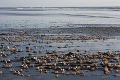 Раковины на пляже Стоковая Фотография