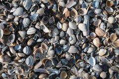 Раковины на пляже Стоковое Изображение
