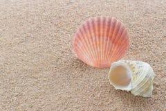 Раковины на пляже стоковые фотографии rf