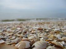 Раковины на пляже Стоковые Изображения
