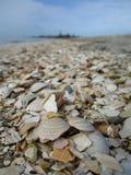 Раковины на пляже стоковое фото