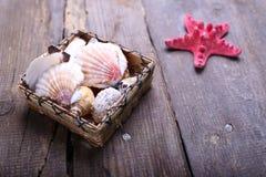 Раковины на таблице Стоковое Фото