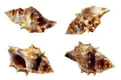 раковины образцов Стоковое Изображение