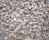 Раковины песка пляжа острова Holbox в Мексике Стоковое фото RF
