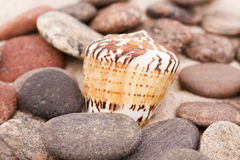 раковины песка составов пляжа стоковые изображения rf