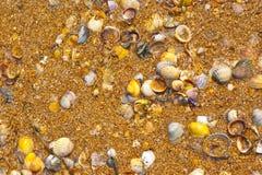 раковины песка Стоковые Фотографии RF