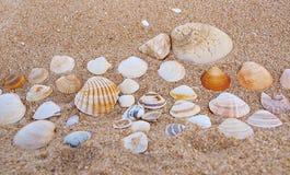 раковины песка стоковое изображение rf