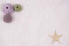 раковины песка Стоковое Изображение