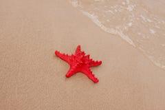 раковины пляжа стоковые фотографии rf