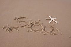 раковины пляжа Стоковое Изображение RF
