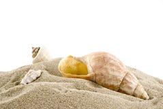 раковины пляжа стоковое фото rf