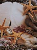 Раковины помытые на берег Стоковая Фотография