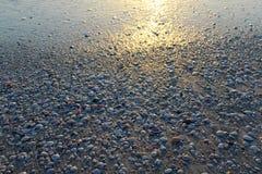 Раковины пляжа во время предпосылки захода солнца Стоковые Фотографии RF
