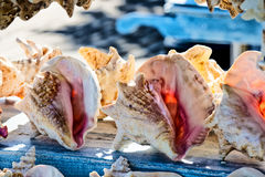 Раковины раковины Стоковое Фото