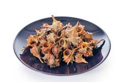 раковины тарелки раковины Стоковое Изображение RF