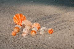 Раковины цвета на песчаном пляже Стоковые Изображения RF