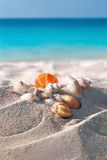 Раковины цвета на песчаном пляже Стоковое фото RF