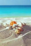 Раковины цвета на песчаном пляже Стоковое Изображение RF