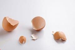 Раковины яичек Стоковые Изображения