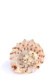 раковины Стоковое Изображение RF