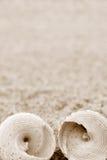 раковины Стоковая Фотография