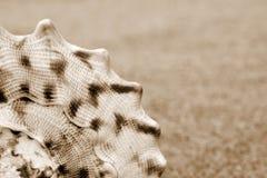 раковины Стоковые Фото
